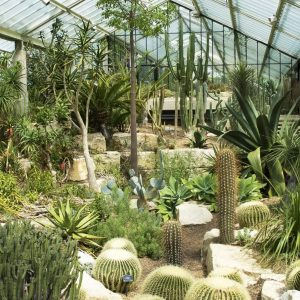 Kew Gardens and Palace Experience in London