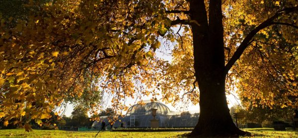 Thames Cruise + Botanical Gardens Experience For Two